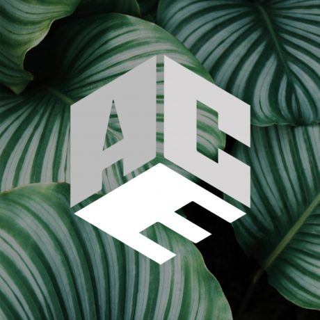 The ACE Agency Logo On Leaves